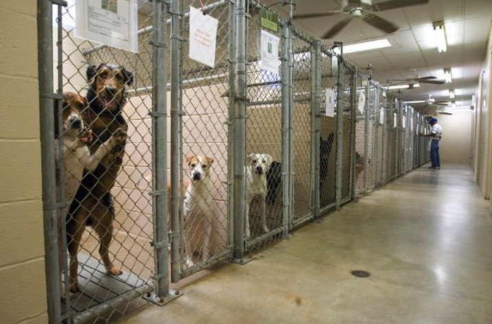 pet-shelter