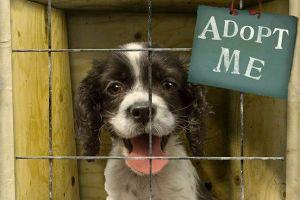 pet-shelters